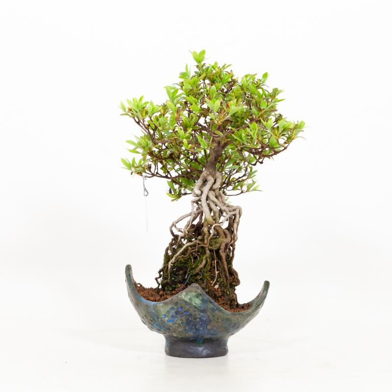 Azalée - 28 cm
