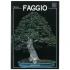 Faggio - Miniguida BONSAI & news