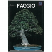 Faggio - Miniguida BONSAI & news
