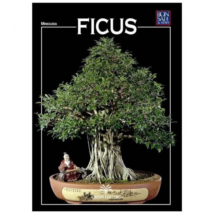 Ficus - Miniguida BONSAI & news
