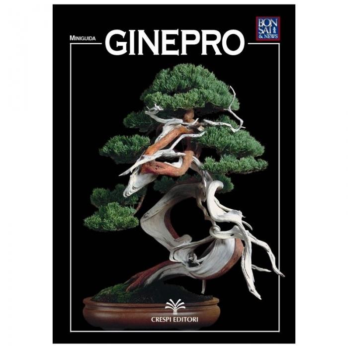 Ginepro - Miniguida BONSAI & news