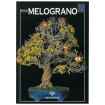 Melograno - Miniguida BONSAI & news