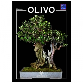 Olivo - Miniguida BONSAI & news
