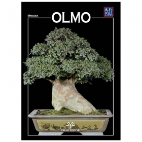 Olmo - Miniguida BONSAI & news