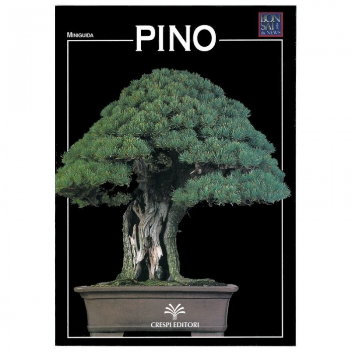 Pino - Miniguida BONSAI & news