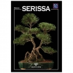 Serissa - Miniguida BONSAI & news