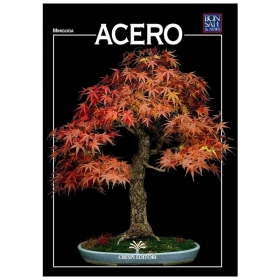 Acero - Miniguida BONSAI & news
