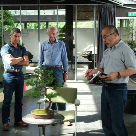 Workshop bonsai individuale o di gruppo