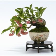 Cours débutants bonsai shohin