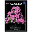 Azalea - Miniguida BONSAI & news