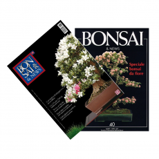 Special Azalea - BONSAI & news n. 40 and 131
