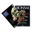 Special Azalea - BONSAI & news n. 40 and 131