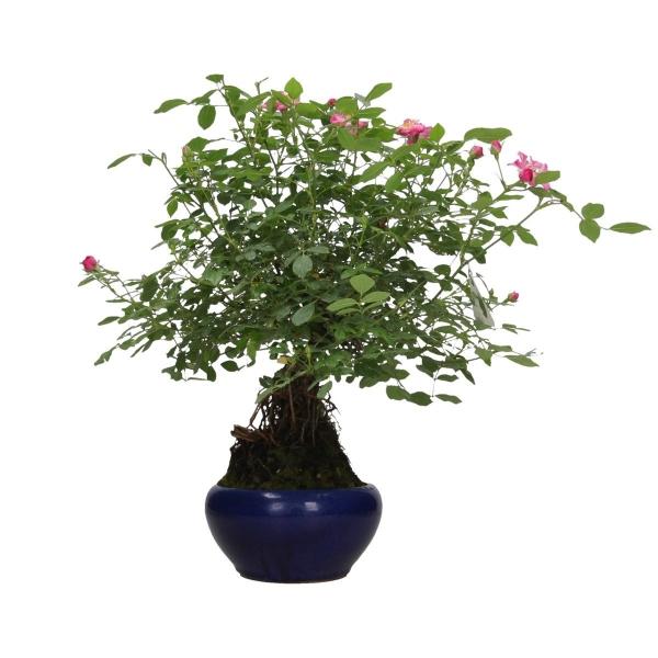 Rose - 46 cm