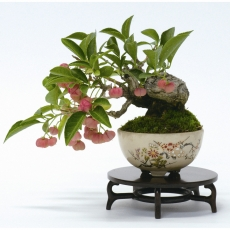 bonsai shohin for beginners - Saturday 22 february