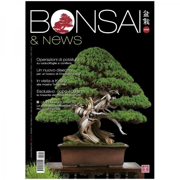 BONSAI & news 177 - Janvier-Fevrier 2020