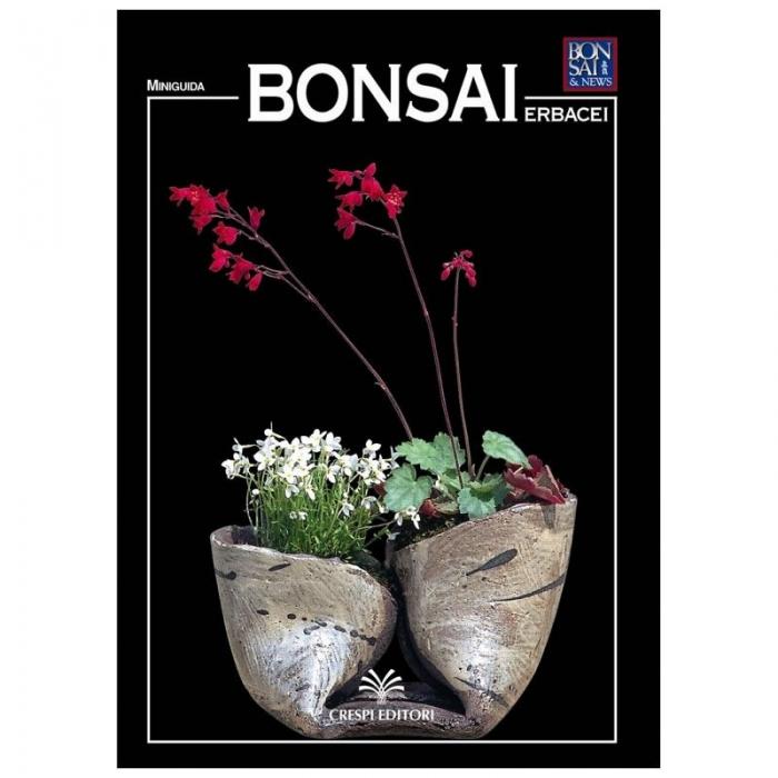 Bonsai erbacei - Miniguida BONSAI & news