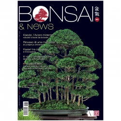BONSAI & news 181 - September-October 2020