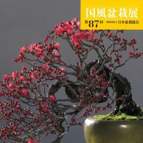 Catalogo Kokufu Bonsai Exhibition 87 - 2013