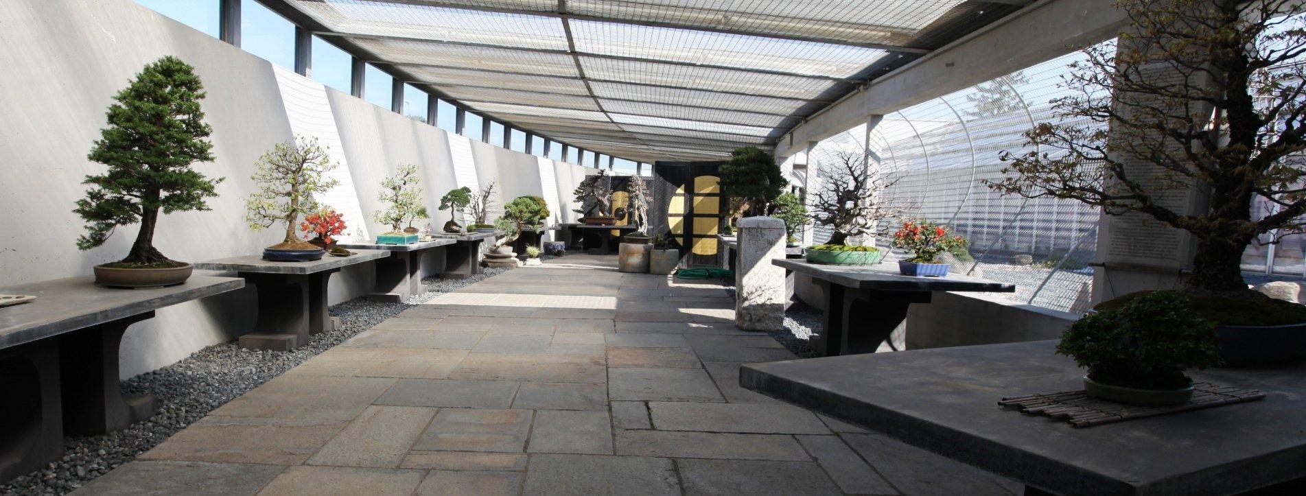 Museo Crespi Bonsai
