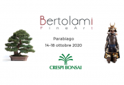 "Special event in Parabiago: ""Asian Art and Bonsai"""